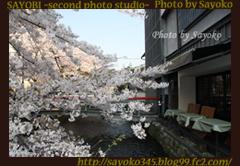 二番目の小夜子の写真館♪2009年4月6日京都祇園白川の桜1 0166