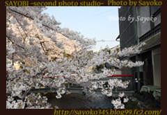 二番目の小夜子の写真館♪2009年4月6日京都祇園白川の桜2 0167