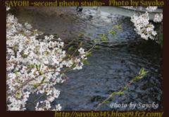 二番目の小夜子の写真館♪2009年4月6日京都祇園白川の桜3 0168