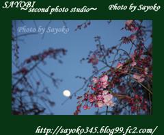 二番目の小夜子の写真館♪2009年4月5日京都植物園の桜のライトアップ1 0176