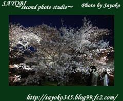 二番目の小夜子の写真館♪2009年4月5日京都植物園の桜のライトアップ5 0180