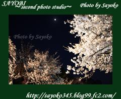 二番目の小夜子の写真館♪2009年4月5日京都植物園の桜のライトアップ6 0181