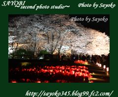 二番目の小夜子の写真館♪2009年4月5日京都植物園の桜のライトアップ7 0182