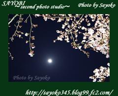 二番目の小夜子の写真館♪2009年4月5日京都植物園の桜のライトアップ9 0184