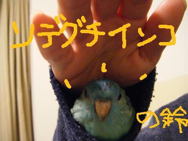 005_convert_20090529225459[1]