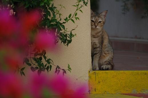 猫は見た!