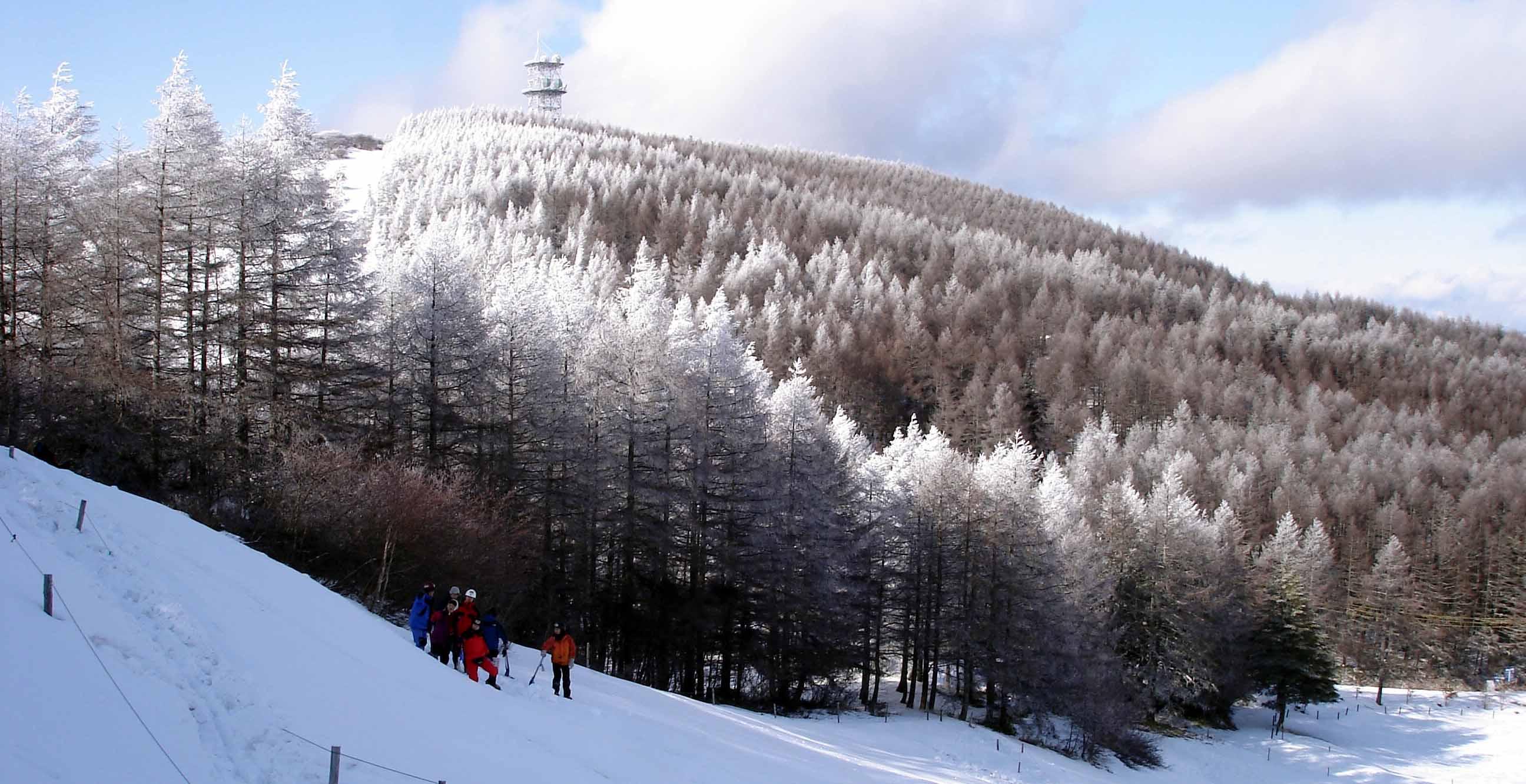2008.1.13 ★唐松林にできた樹氷+樹霜
