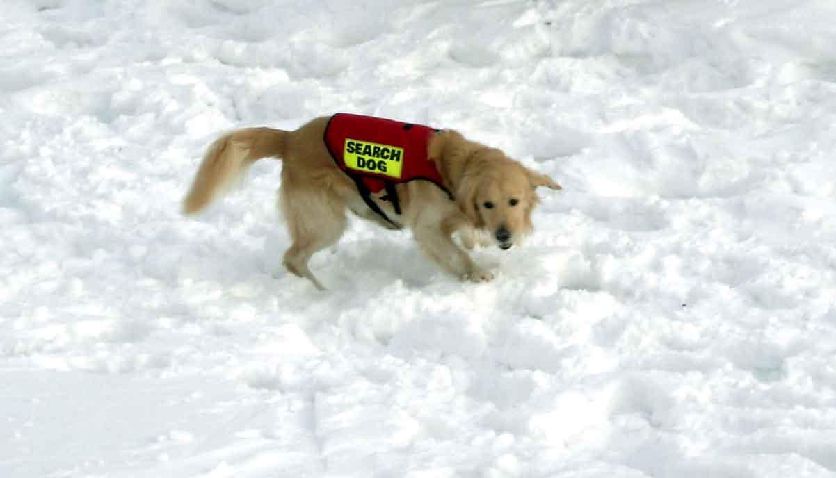 2008.1.14 雪崩捜索犬デモ③(捜索中のチャンス)