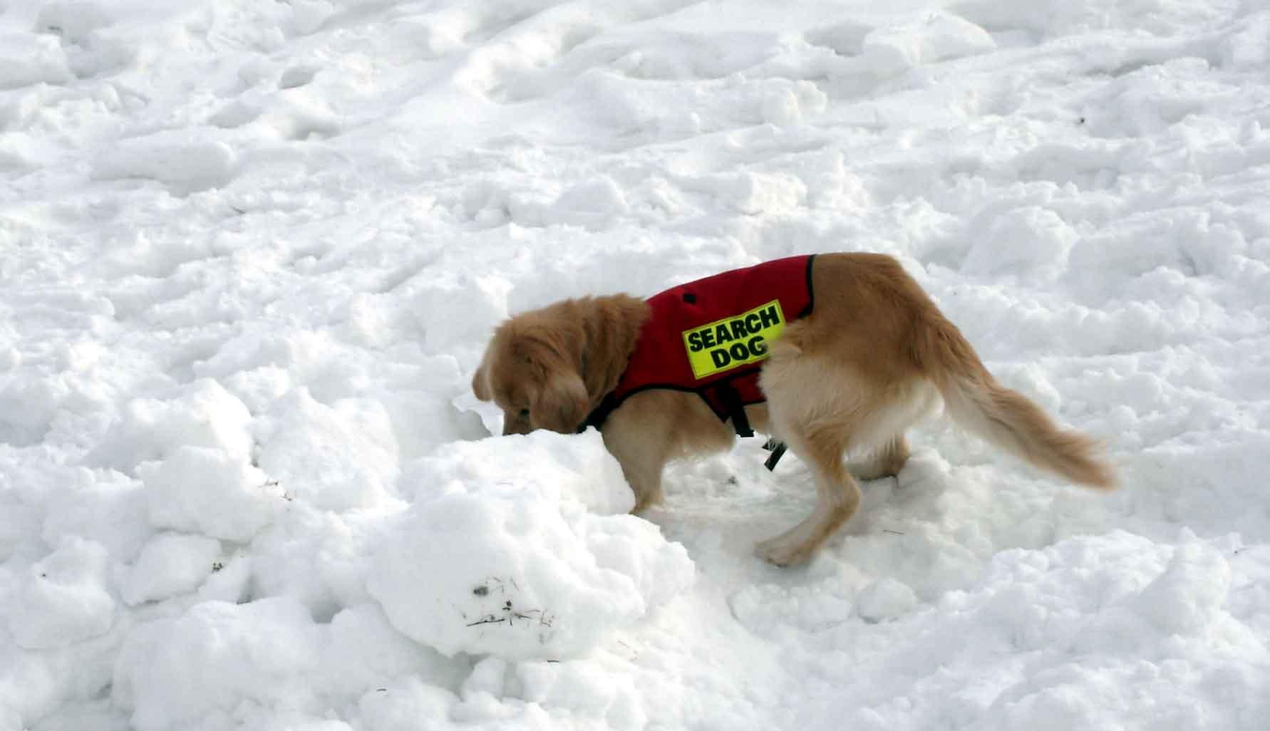 2008.1.14 雪崩捜索犬デモ⑤(埋没者の臭いを捉えたチャンス)