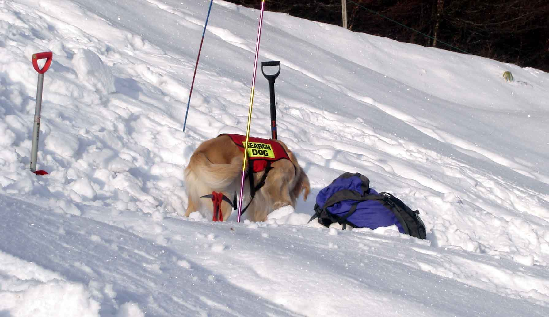 雪崩捜索犬デモ④(ザック他を気にするチャンス)