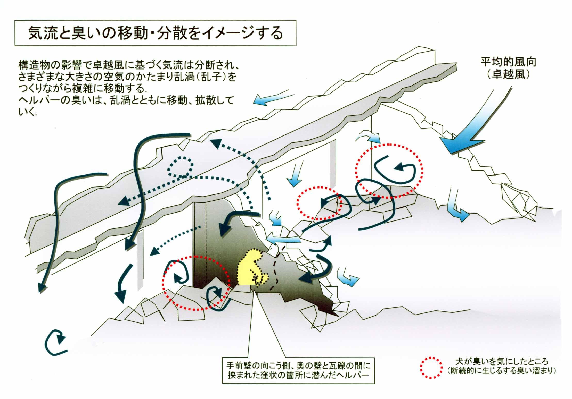 図面 ヘルパーの臭いの移動と分散(イメージ)
