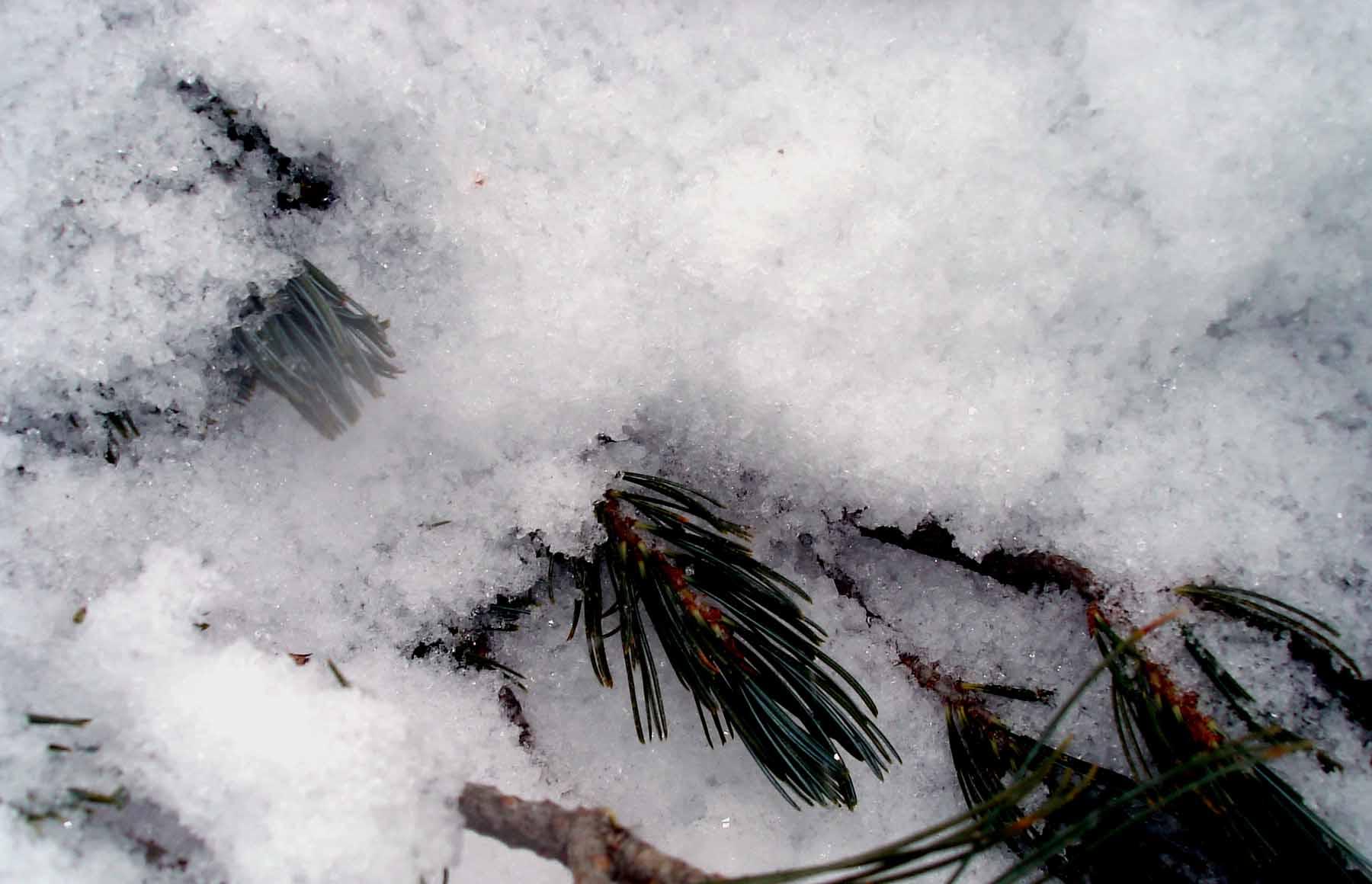 這松付近に成長したしもざらめ雪の様子④★