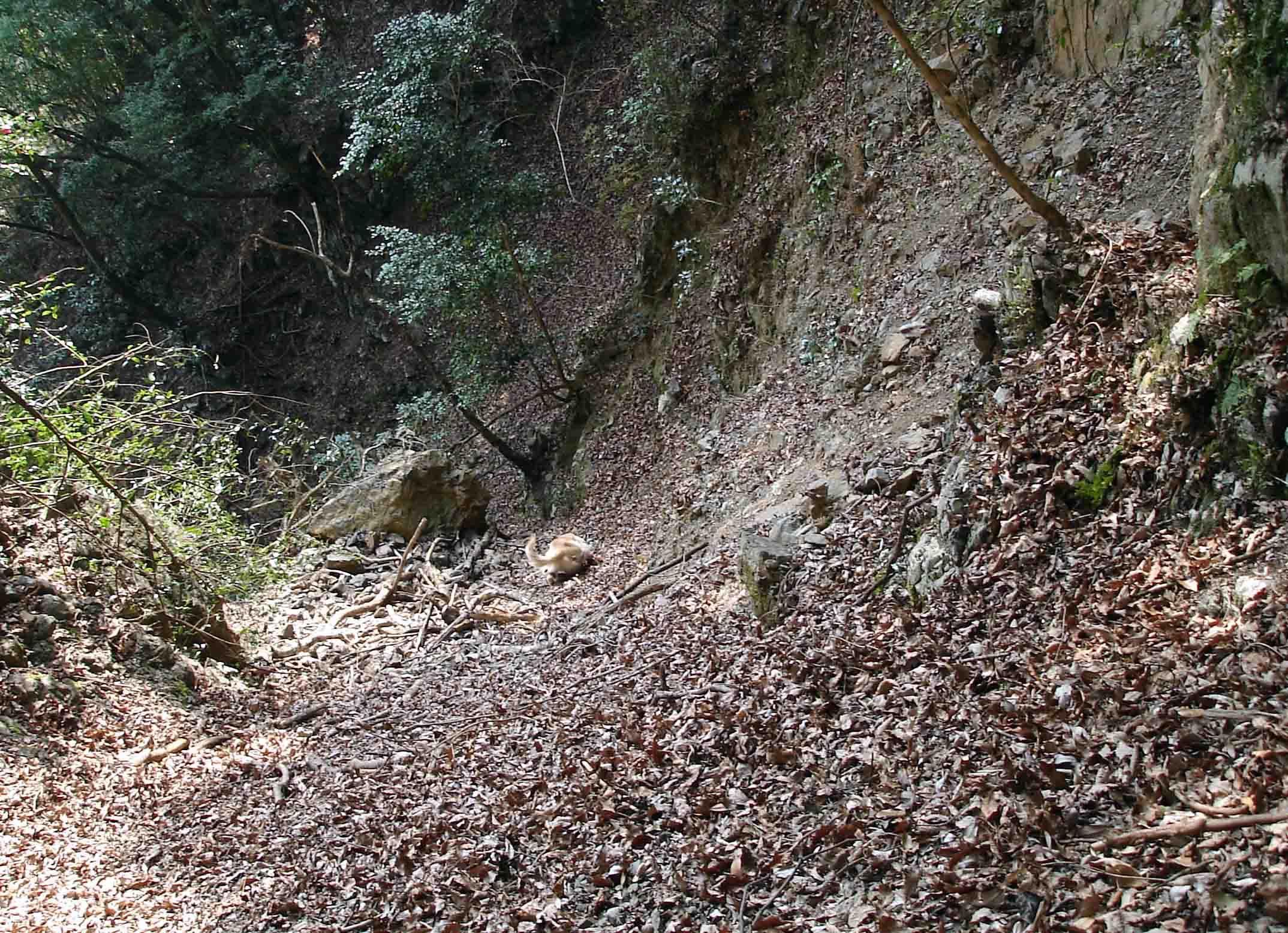 Dsc08426 堆積倒木付近を捜索するチャンス(二王山Ⅱ)