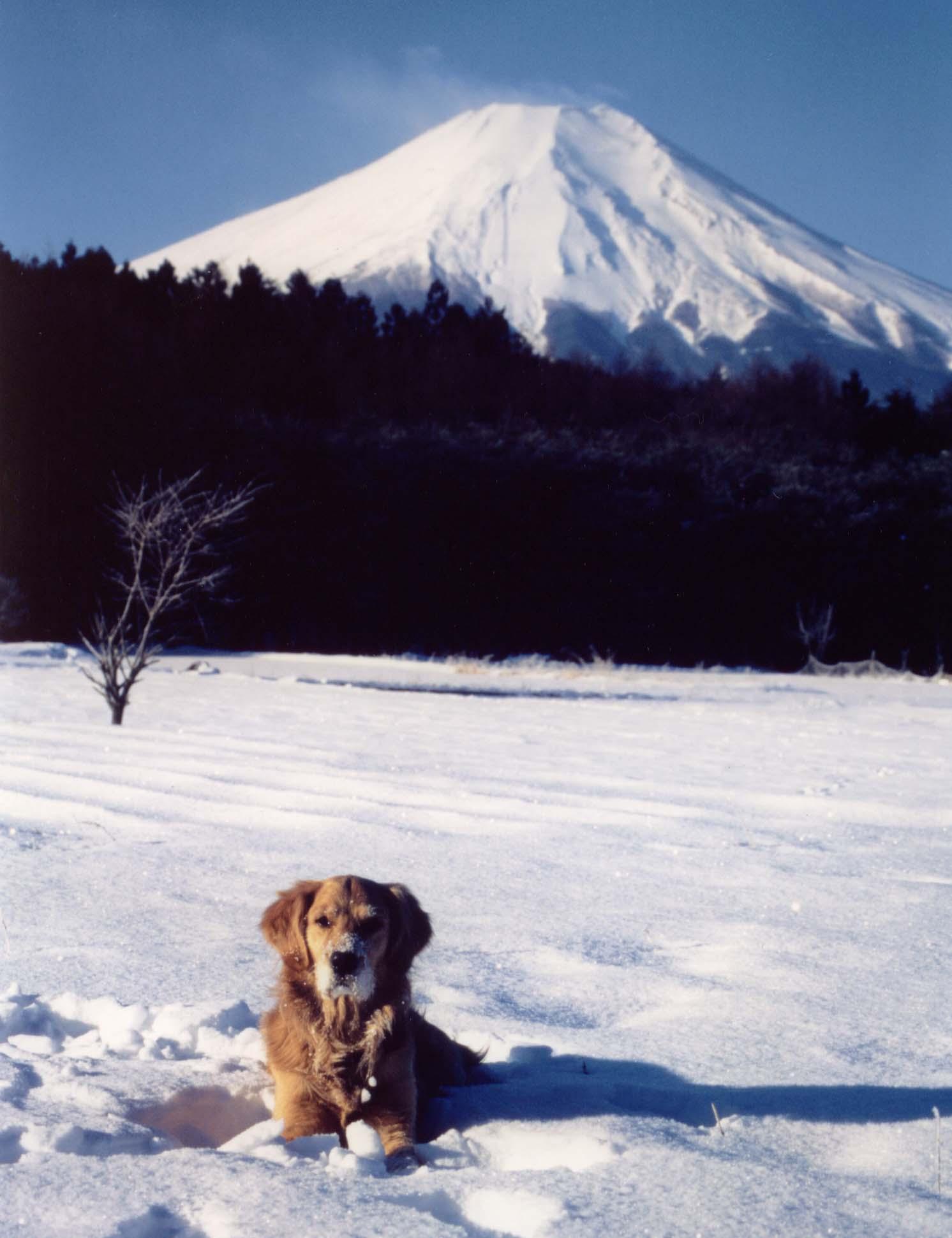 1997.2 ③ 富士をバックに雪原で(再スキャン)