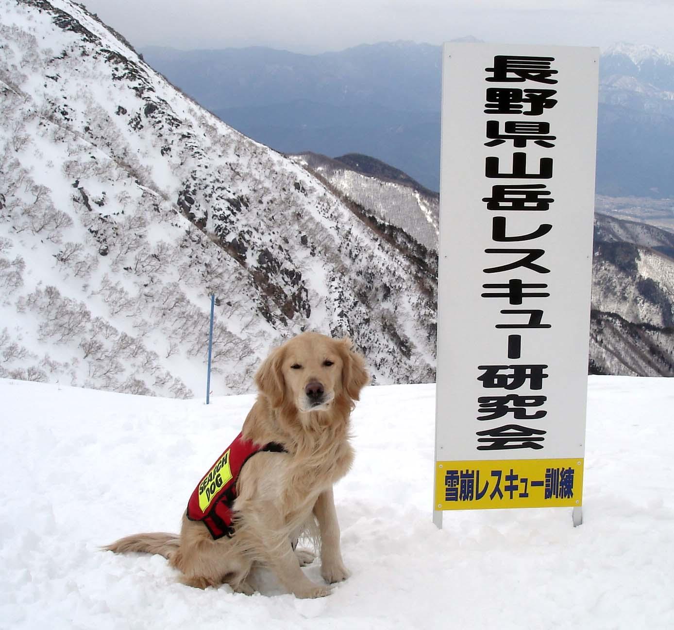 長野山岳レスキュー研究会に参加してきました