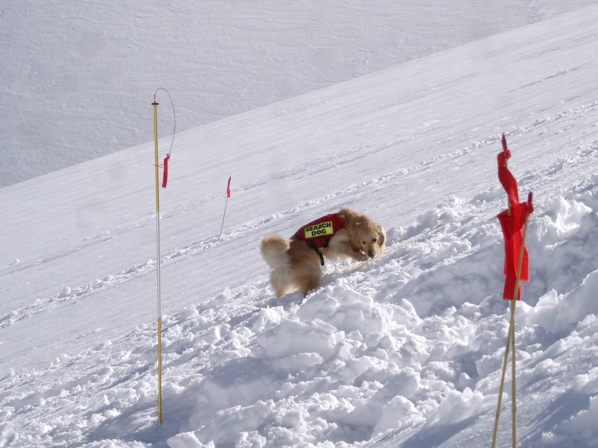 長野山岳レスキュー チャンスによる捜索①