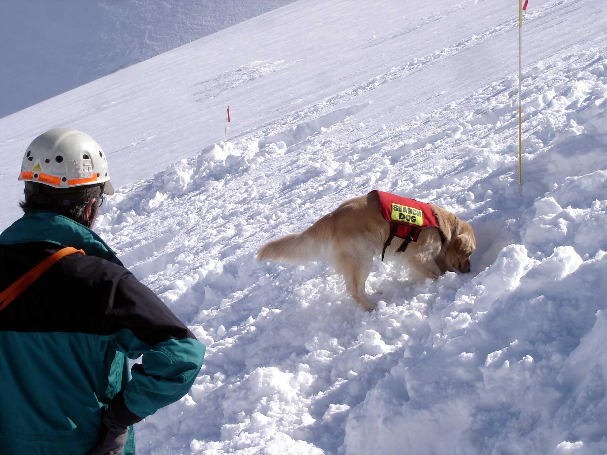 長野山岳レスキュー チャンスによる捜索②(スクラッチ)