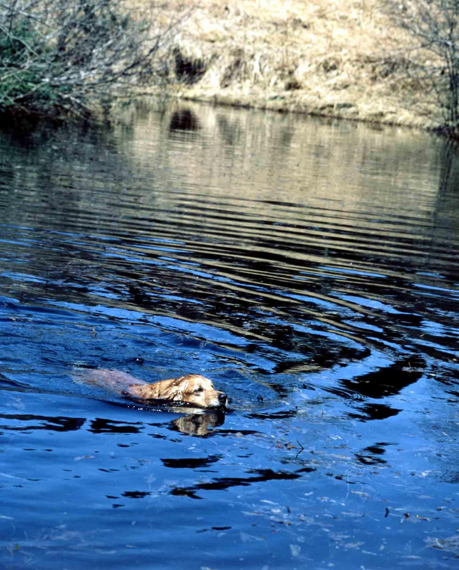 1997.4 ⑧ 池で泳ぐ