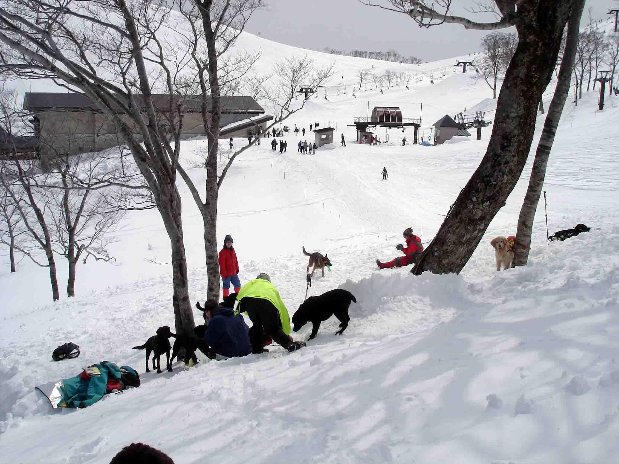 Dsc00187 スキー場脇の斜面で(良い天気)