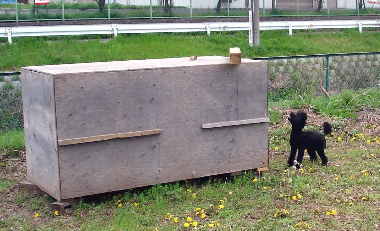 トラジのBOX基本訓練①