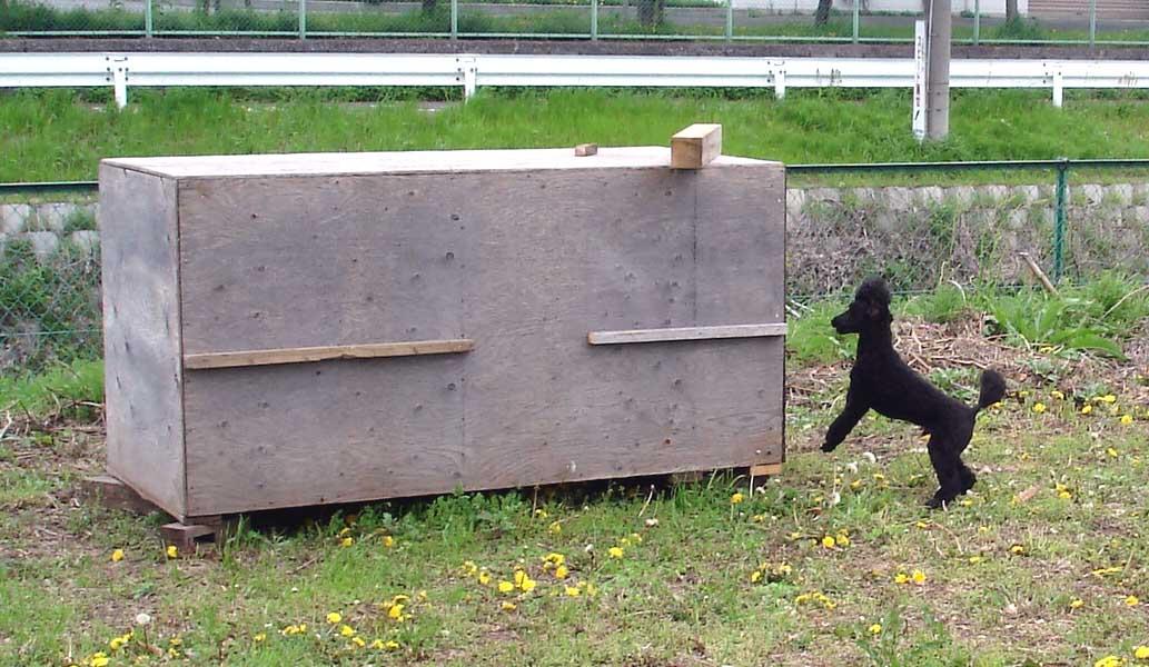 トラジのBOX基本訓練②