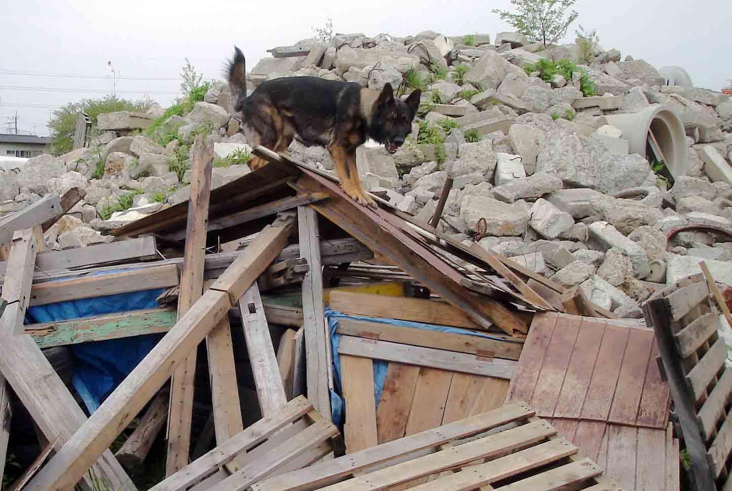 エースの倒壊屋根捜索②