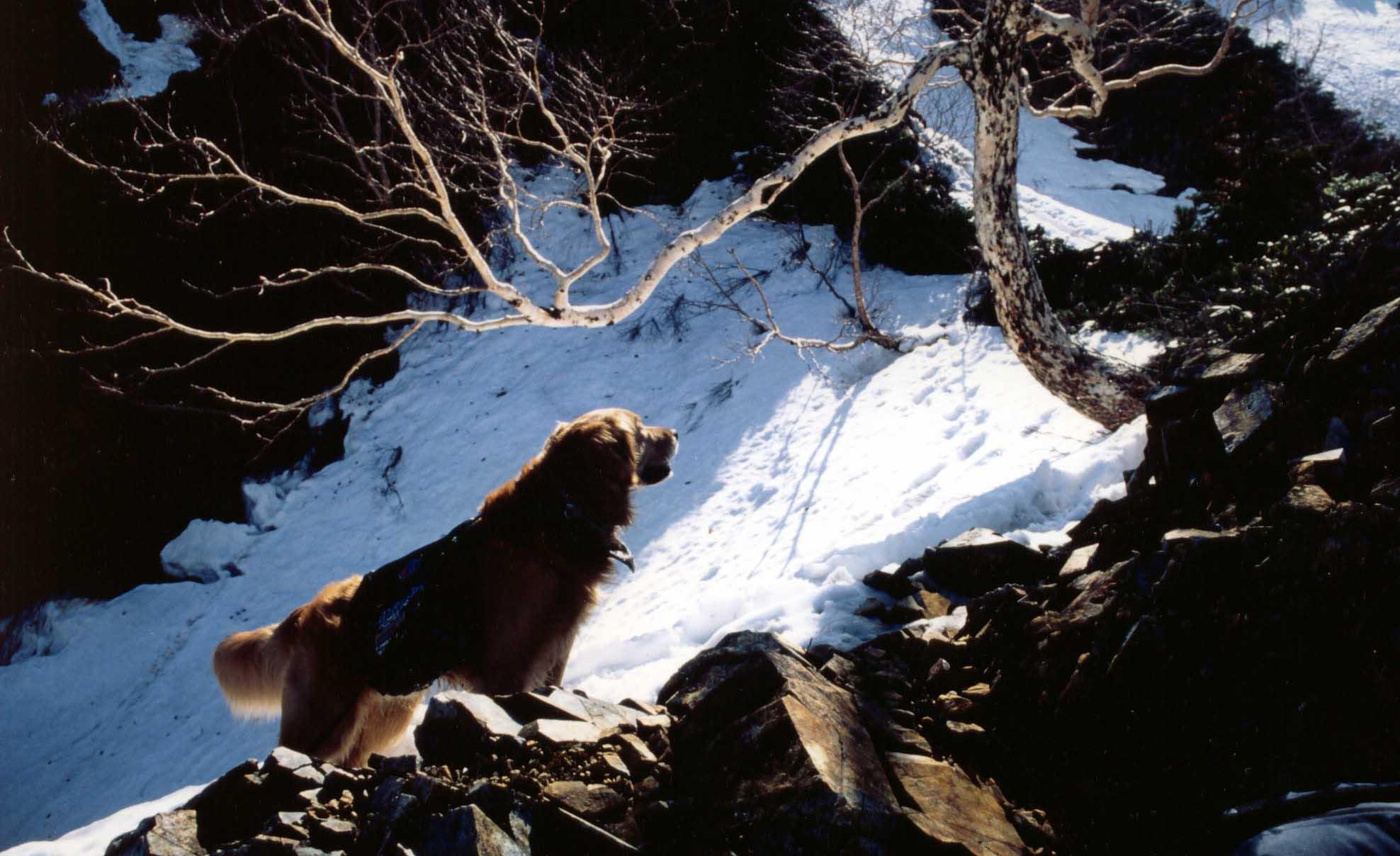 尾根上部、岩と雪の陰影