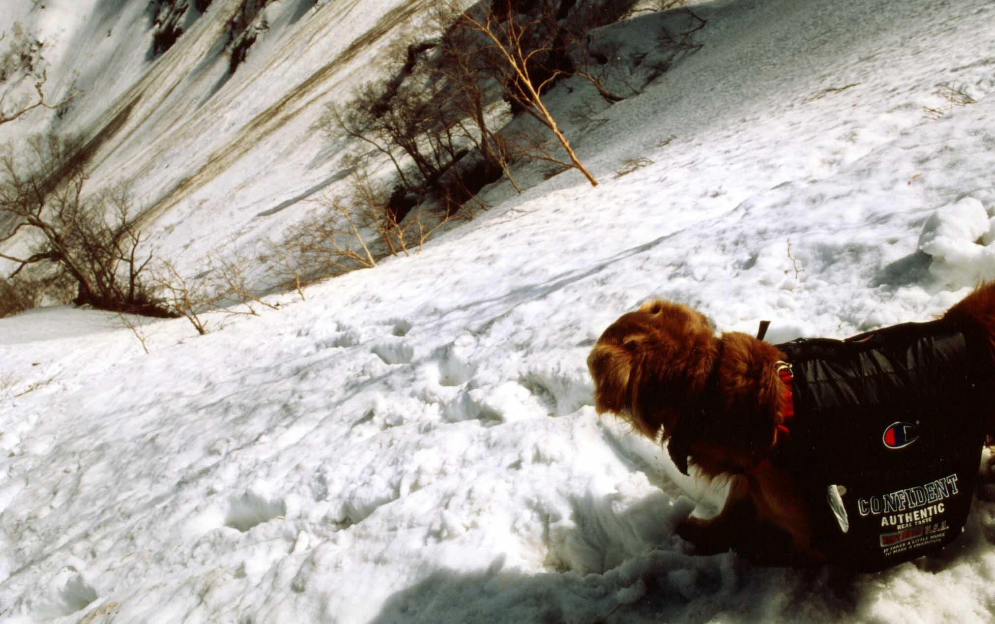 主稜線への雪斜面