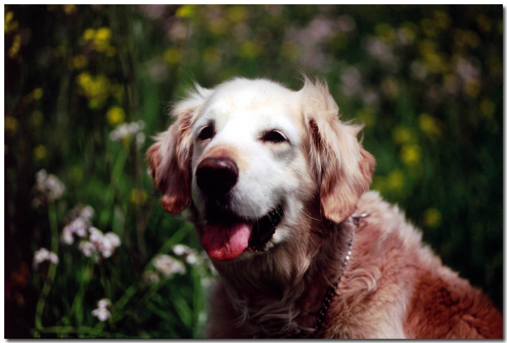 多摩川河川敷(2006年4月17日)花に囲まれて①のドロップシャドウ