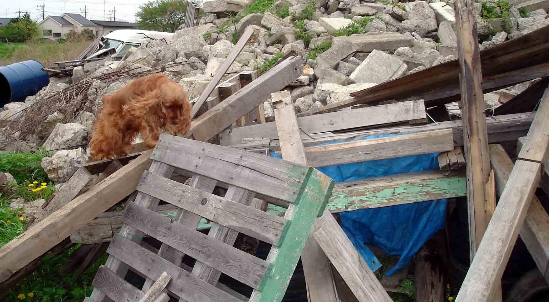 ホリーの倒壊屋根捜索①