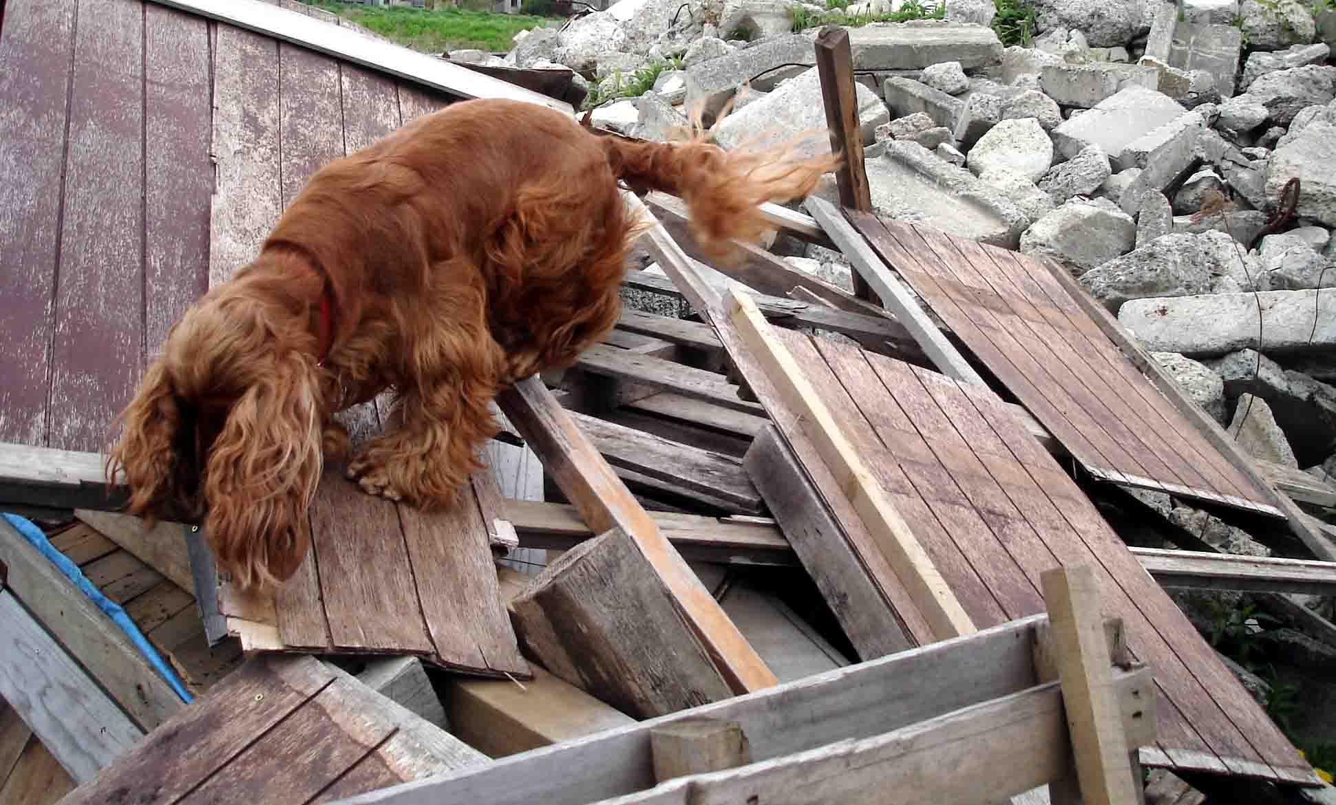 ホリーの倒壊屋根捜索②