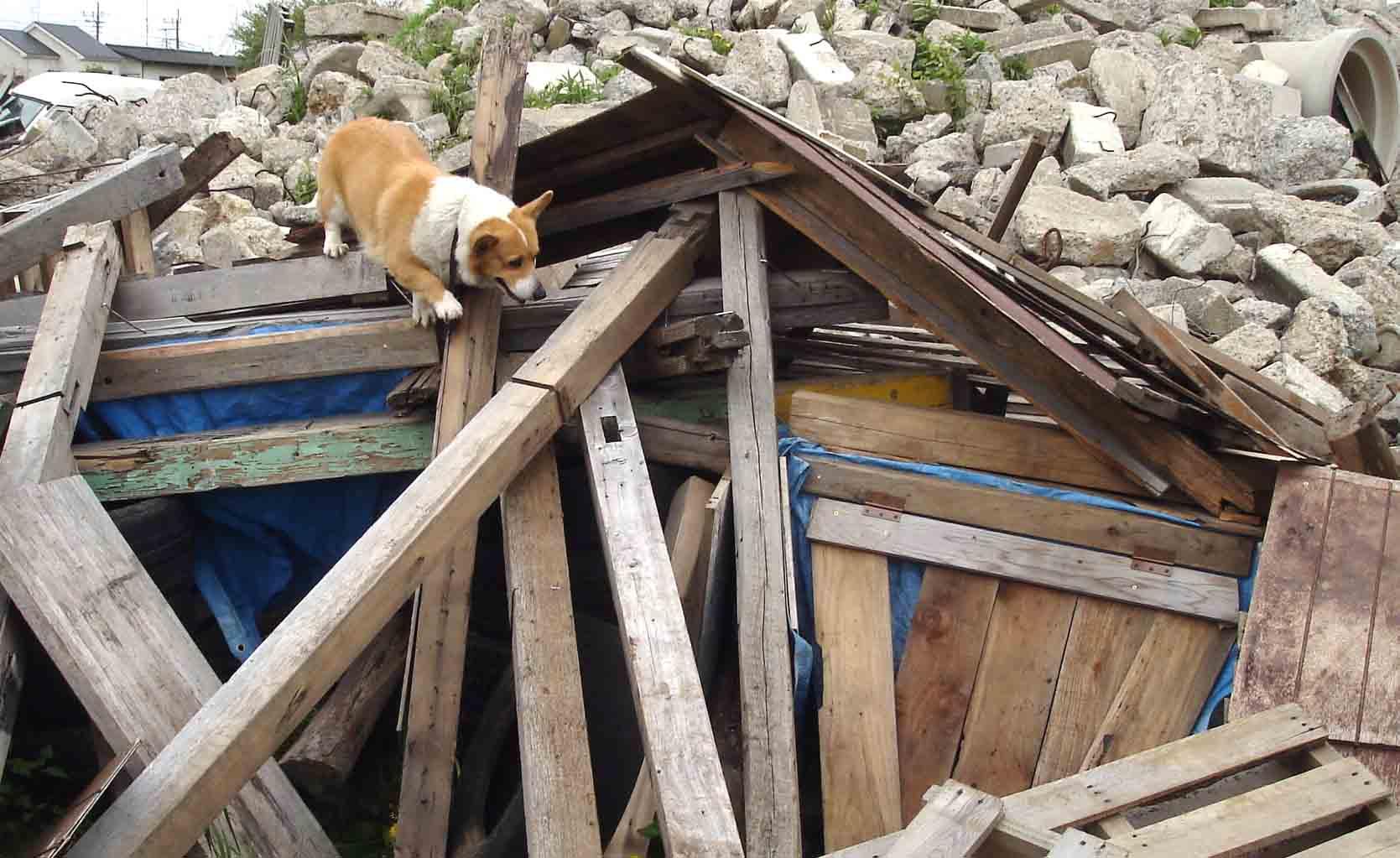 みどりの倒壊屋根捜索