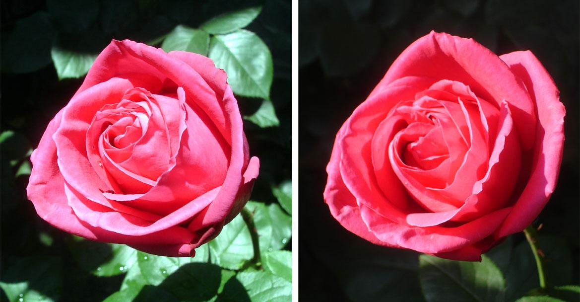 CLマリアカラス(房咲き)昼と午後