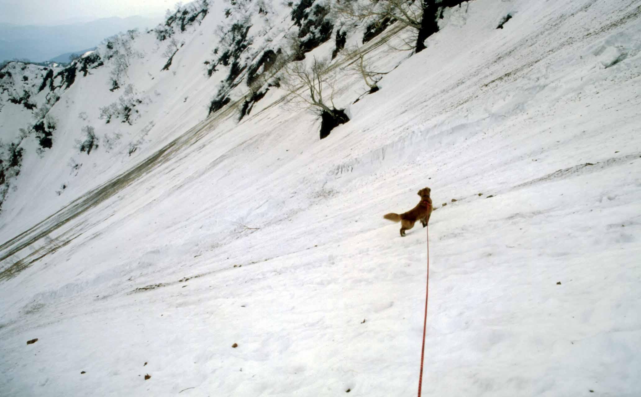 大雪渓の下降