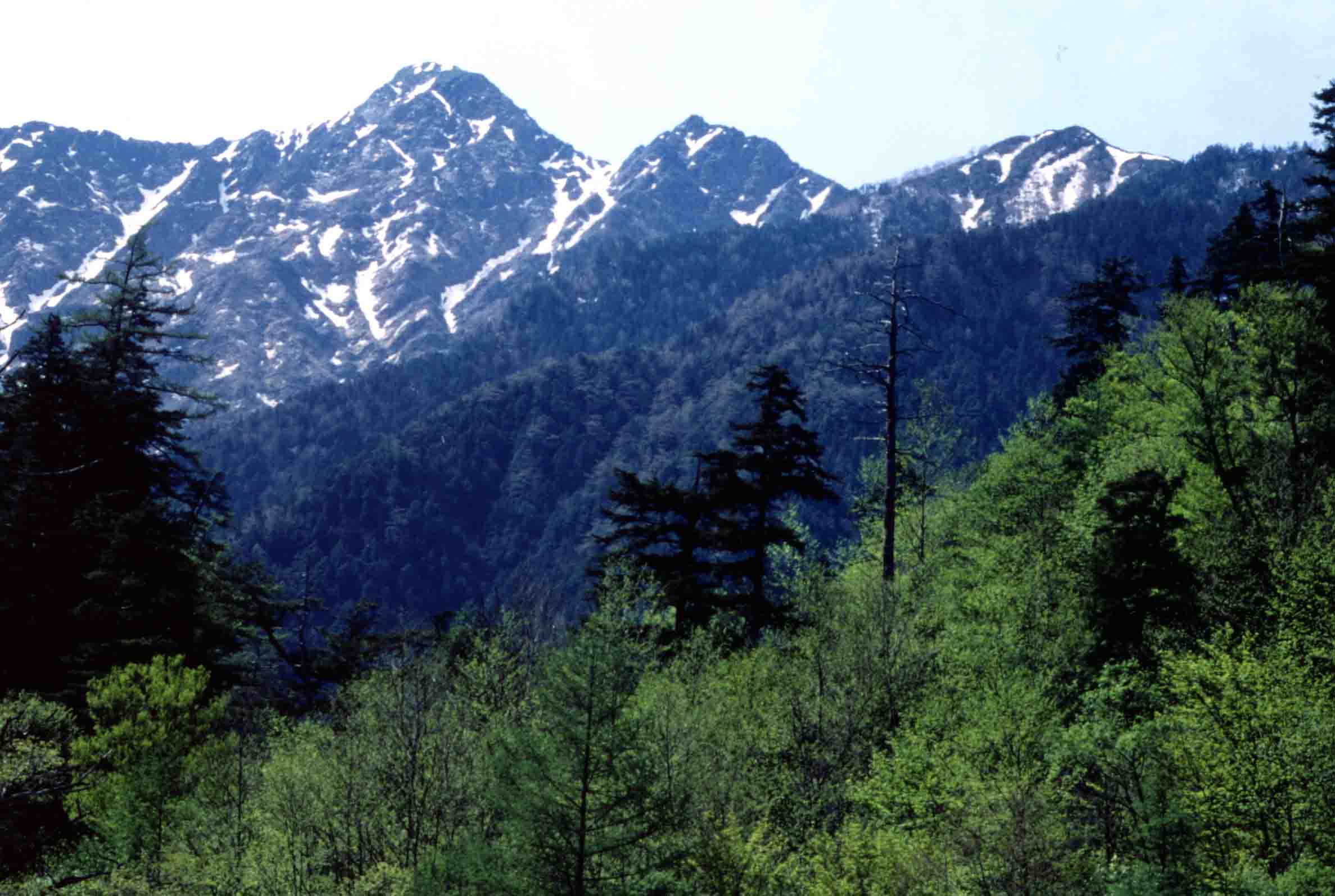 塩見岳周辺の谷(新緑の季節)