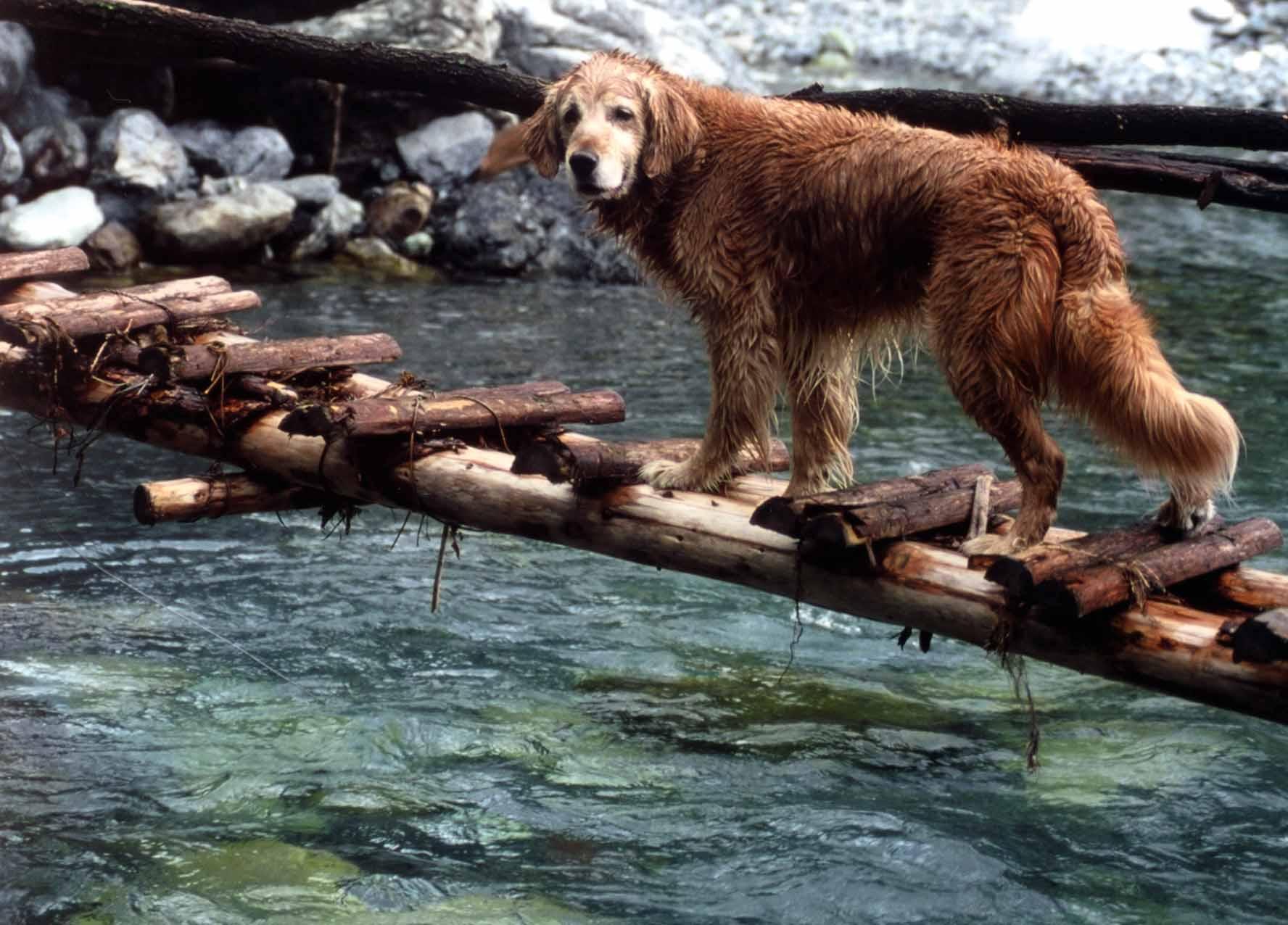 2002 三峰川(出合の簡易橋の上にて)