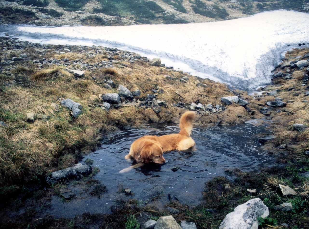 1997.7 ビンゴ 雪解け池の中で