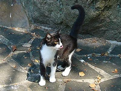 中津城のネコ