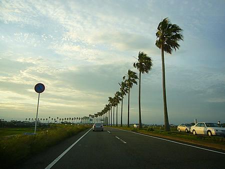 椰子の木並木