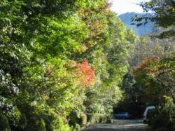 秋晴れのみのう山と染め始めた庭