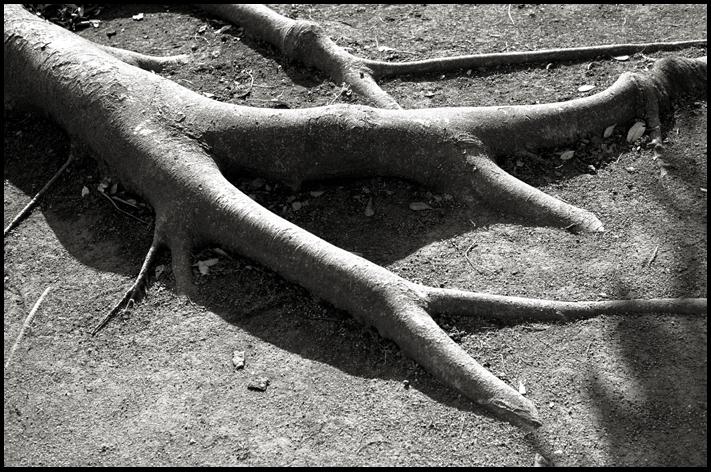 stnemoto.jpg