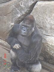 20080316 2