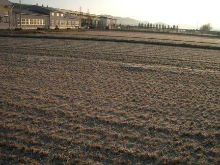 真冬の田んぼ