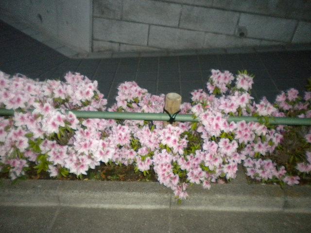 2009-04-26-42.jpg