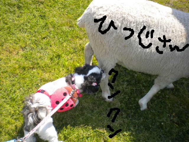 2009-04-29-12.jpg