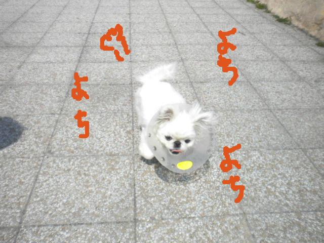 2009-05-02-12.jpg