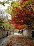 チャンドックン~紅葉
