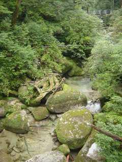 yakushima seiryuu