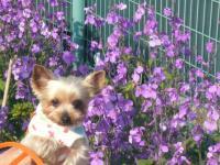 大浜公園紫の花とシャロン