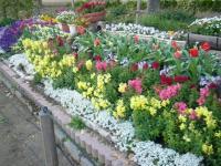 万代池公園花壇